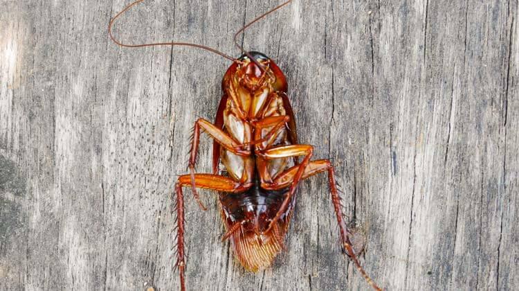 Roach Killers