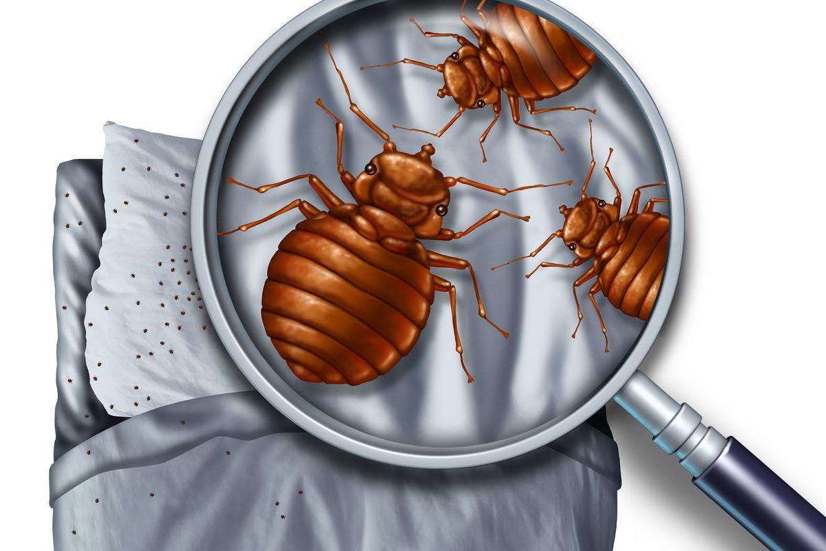 bed bugs pesticide work