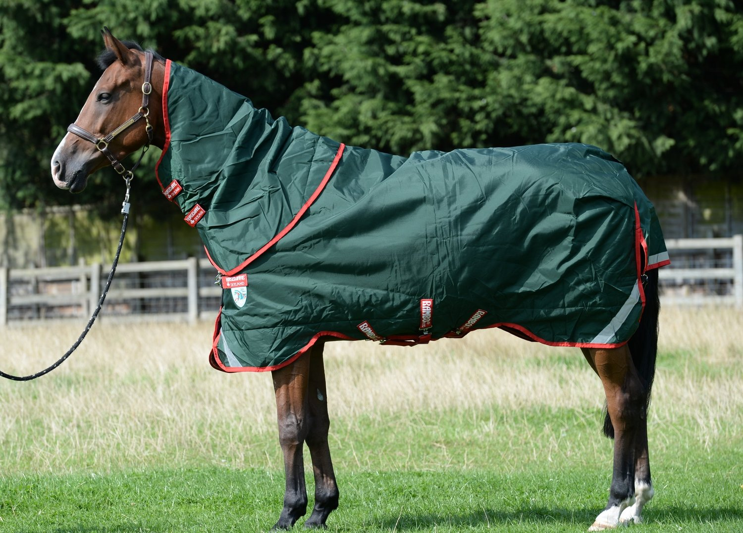 Well-Fitted Rug For Your Horse
